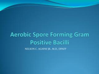 aerobic spore forming gram positive bacilli[1].pdf